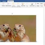 Word für Mac: Bilder nicht proportional schrumpfen